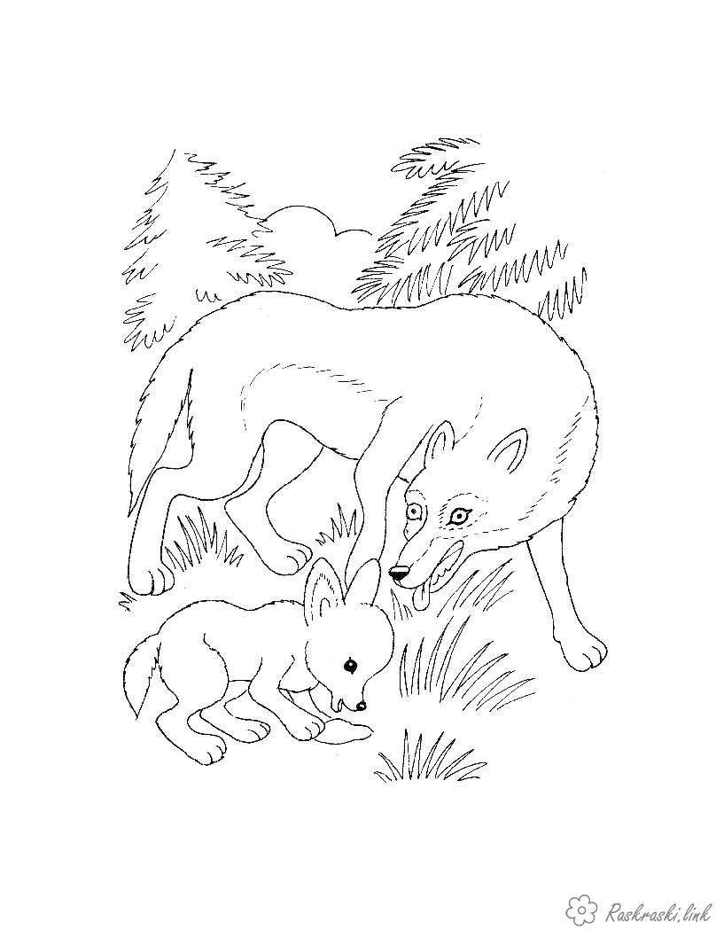Розмальовки ліс розфарбування для дітей, тварини, вовки, ліс