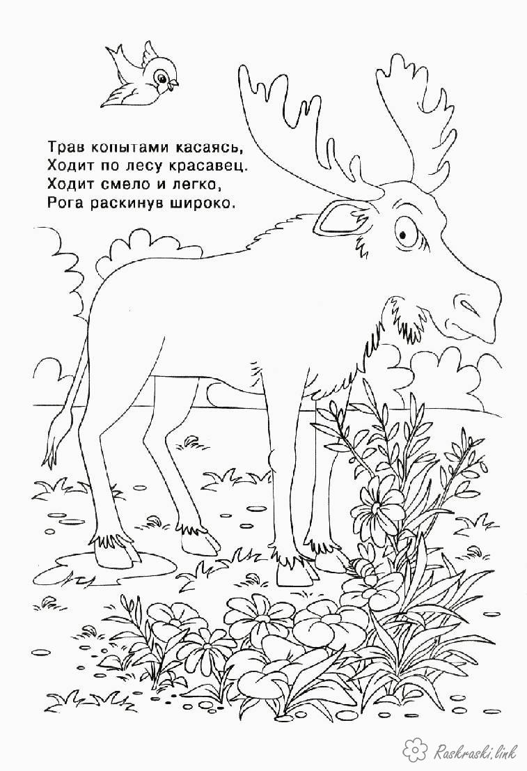 Coloring big coloring pages books for children, animals, elk, forest