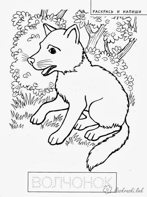 Coloring cub coloring pages, animal, cub