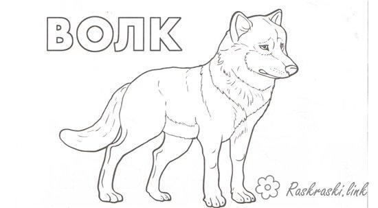 Лесные животные Раскраски распечатать бесплатно.