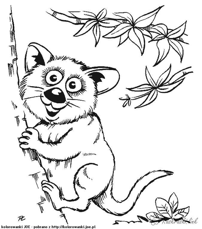 Розмальовки ліс розмальовки лісові тварини, дерево, ліс, природа