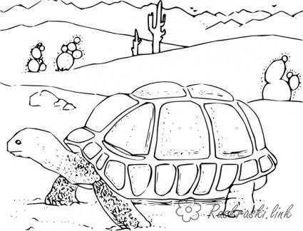 Розмальовки Рептилії розфарбування черепаха на прогулянці, рептилії