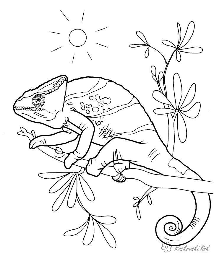 Розмальовки Рептилії розмальовки, хамелеон, реплтіліі