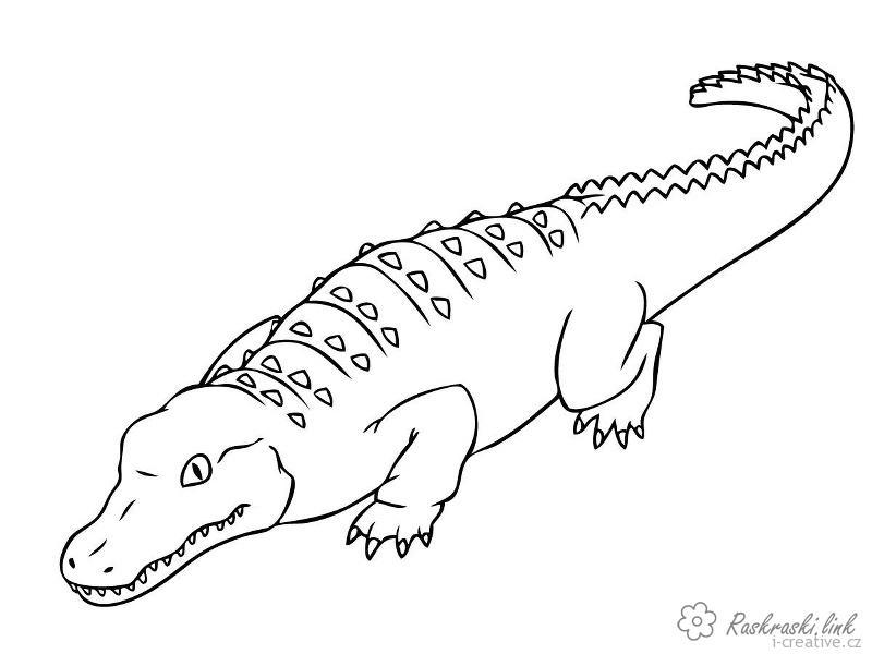 Розмальовки Рептилії розмальовки рептилії, крокодил