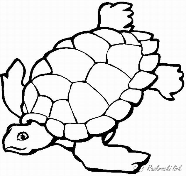 Розмальовки черепаха розмальовки черепаха, рептилії, природа