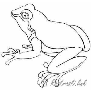 Раскраски природе раскраски для детей, лягушки, рептилии, природа