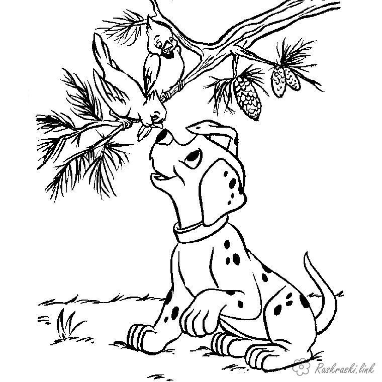 Раскраски дерево далматинец, птенец, дерево