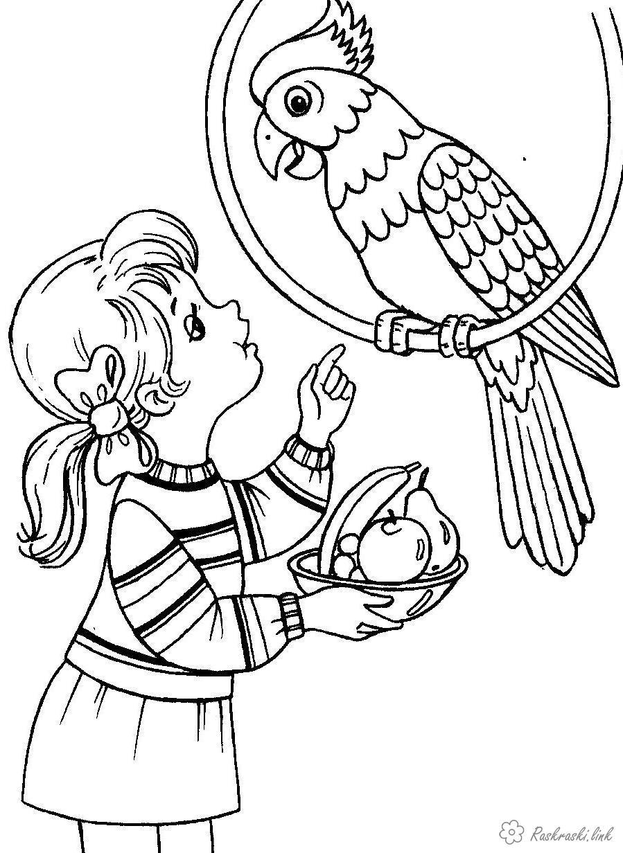 Розмальовки дівчинка Дівчатка, дівчинка, папуга, тварина, птиця