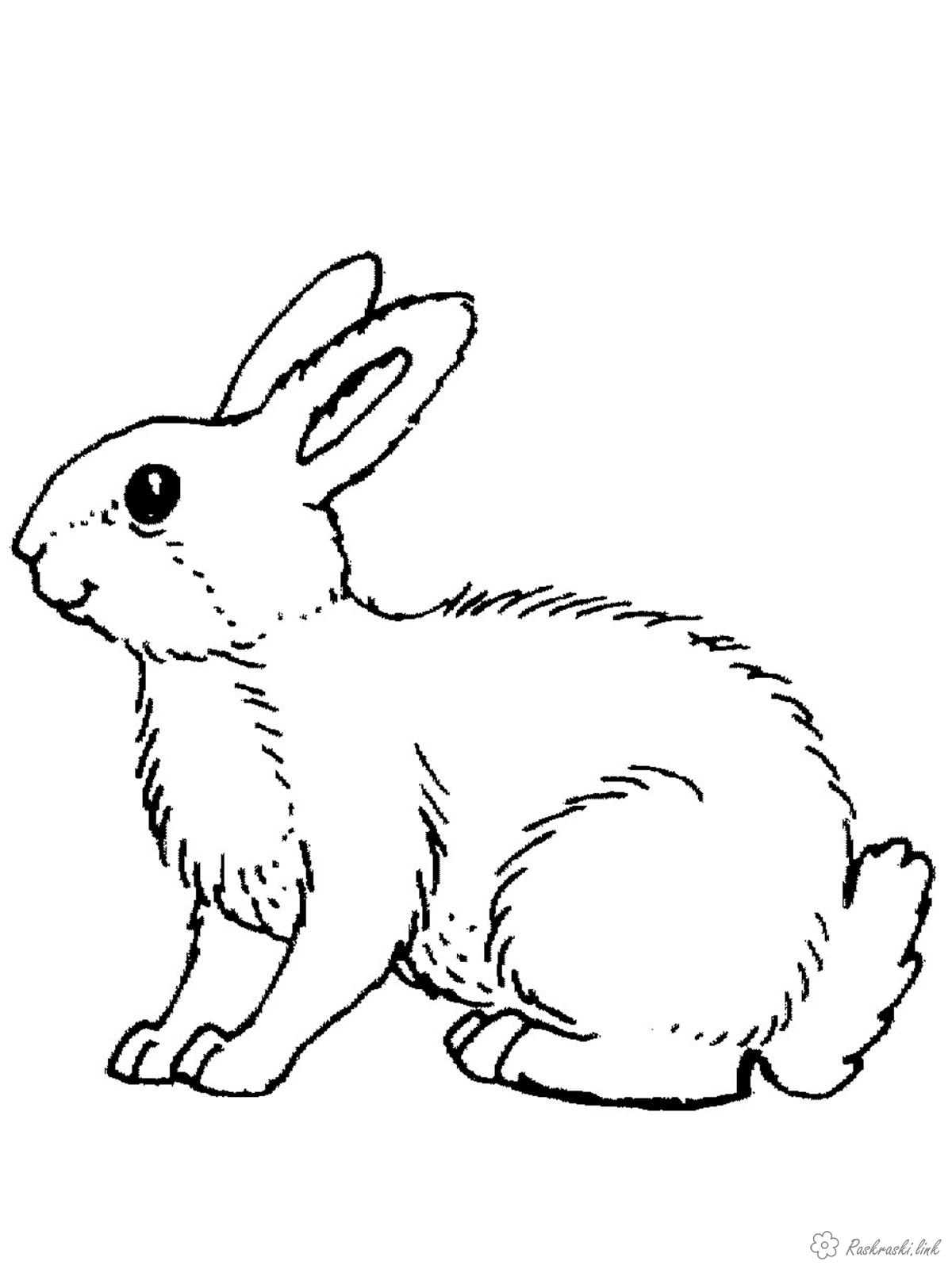 Coloring beasts nature of the beasts of the forest hare