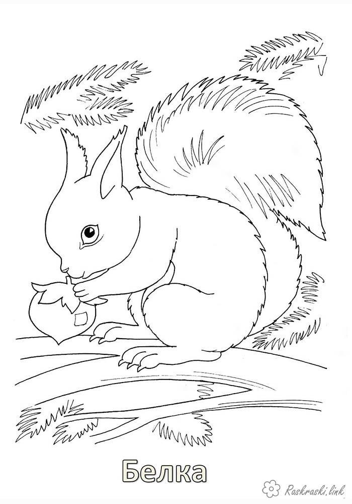 Розмальовки гілка природа лісові тварини білка гілка горіх