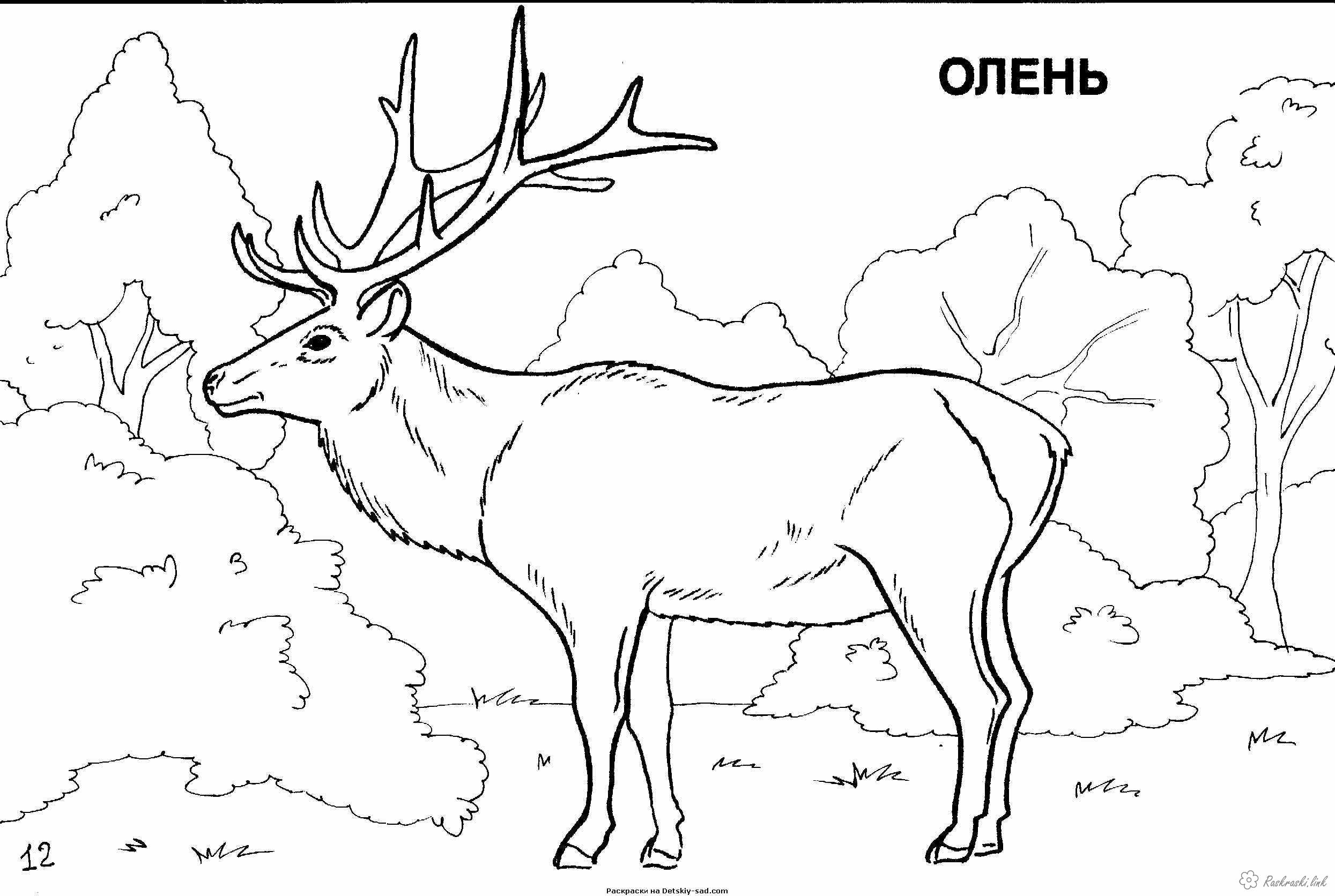 Coloring beasts nature forest animals beasts deer grass trees