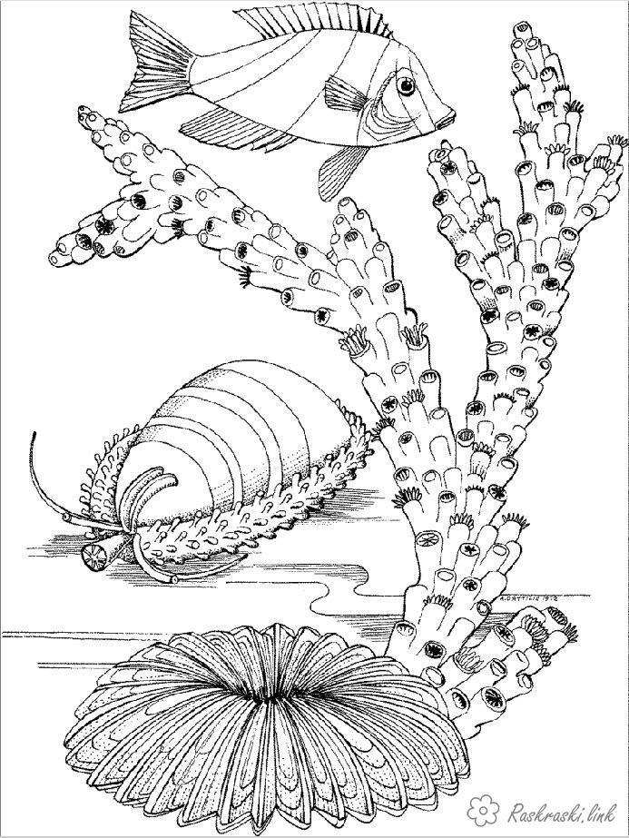 Розмальовки Підводний світ природа підводний світ корал риба рибка