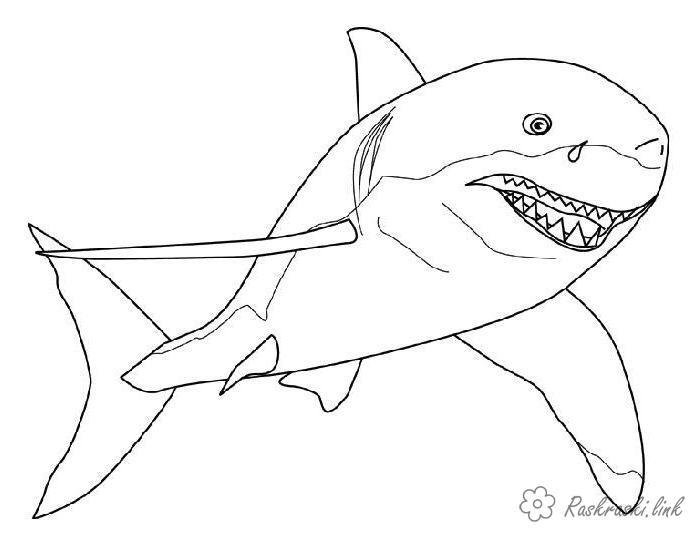 акула Раскраски распечатать бесплатно.