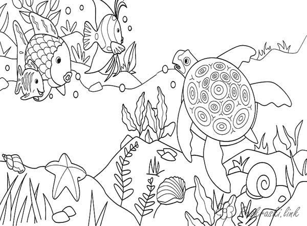 Раскраски природа черепаха и рыба
