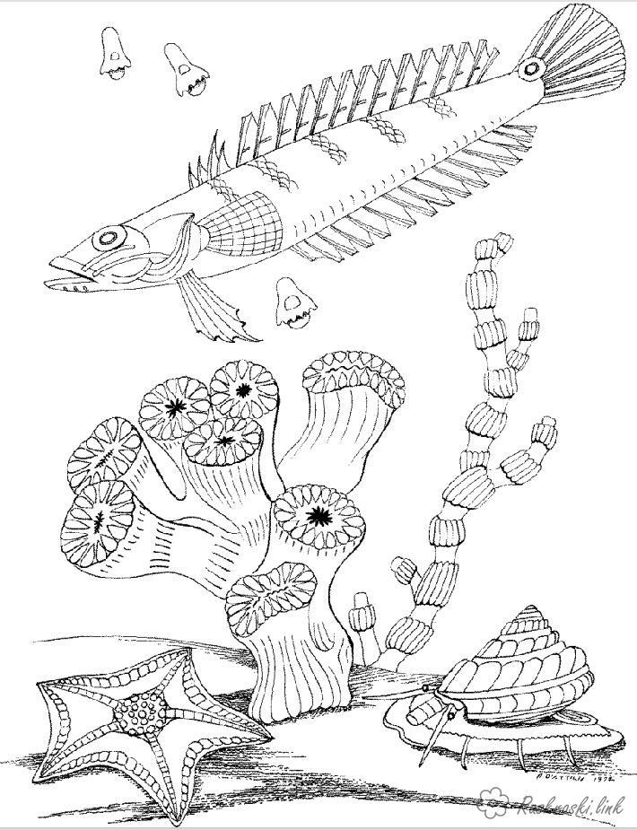 Розмальовки Підводний світ природа корали риба підводний світ