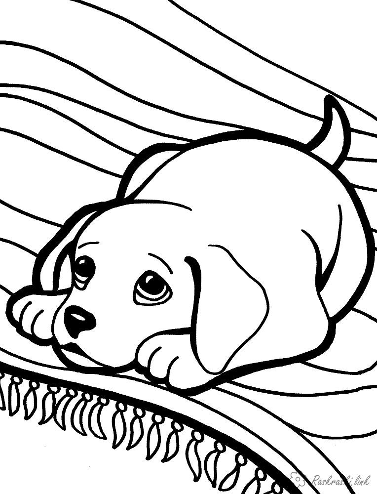 Coloring Domestic animals coloring pages dog, print, online, for children
