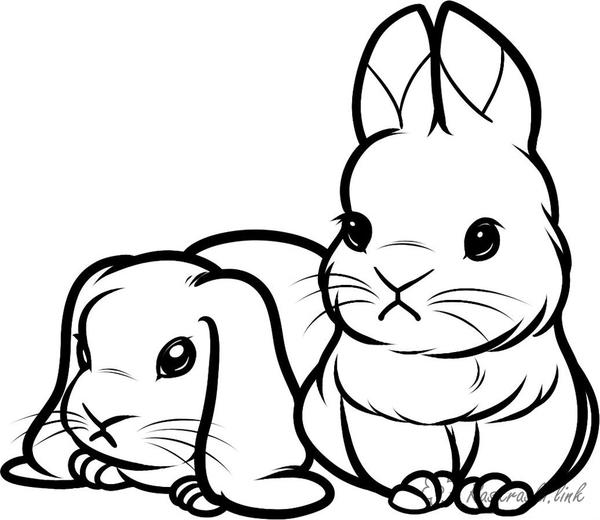 Coloring Domestic animals coloring pages rabbits, hares, for free, online for children