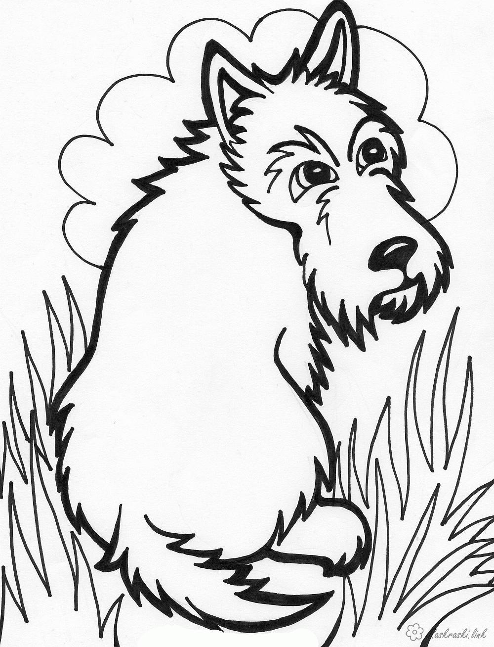 Розмальовки собака собачка, трава, сидить, розмальовки для дітей
