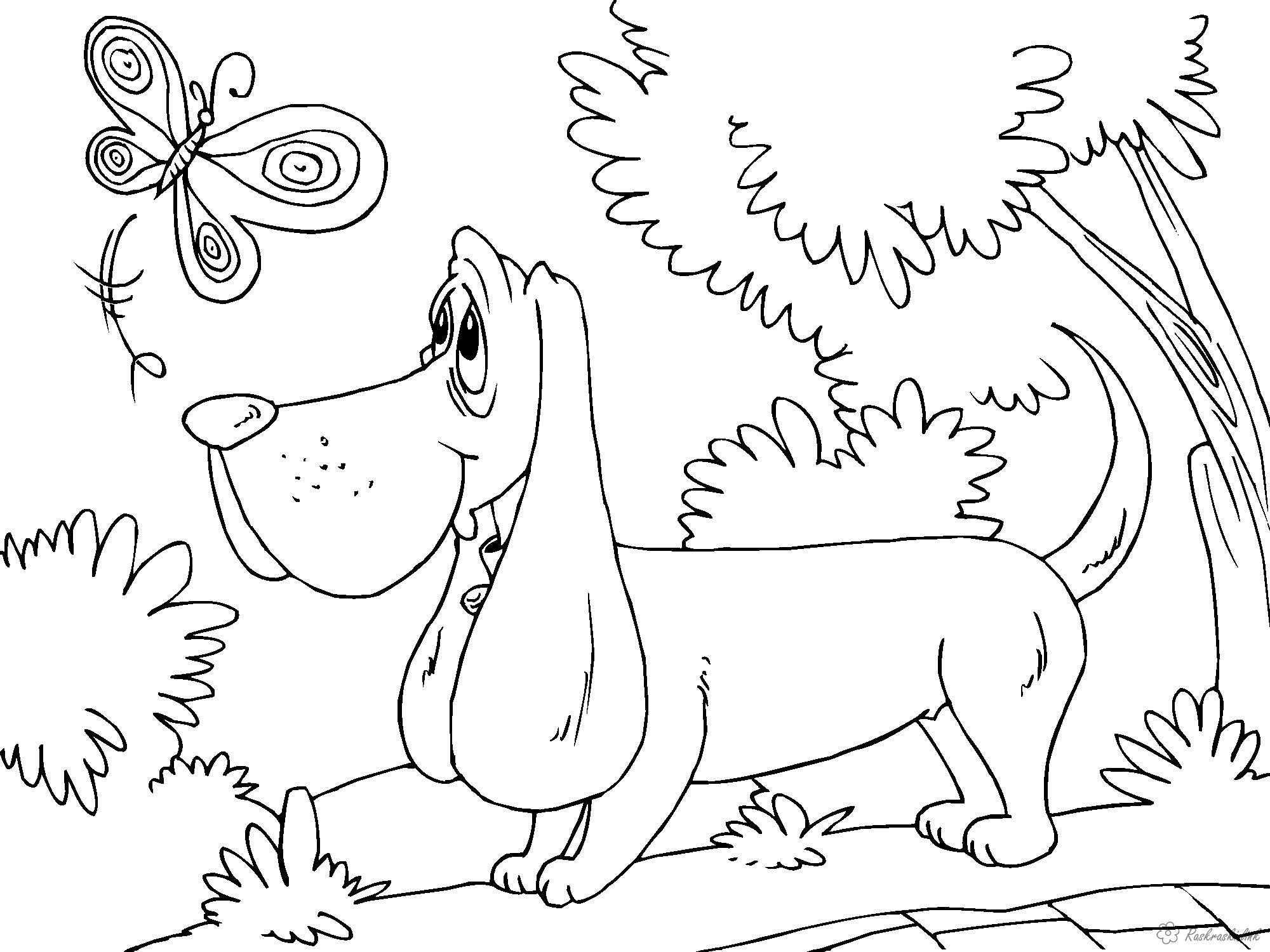 Розмальовки маленька метелик, ліс, такса, дерева, розмальовки для дітей