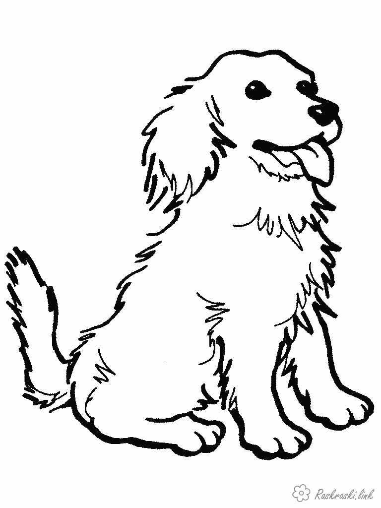 Coloring Dogs home coloring pages dog sitting