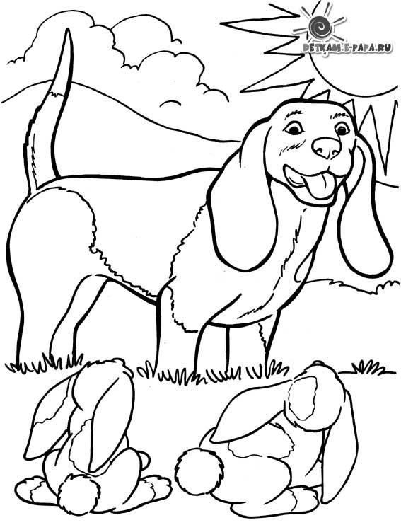 собаки Раскраски распечатать бесплатно.