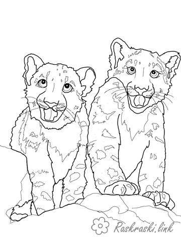 Coloring Panther Pretty young leopard coloring pages for children