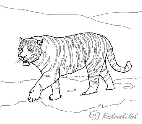 Coloring Wild animals coloring pages tigers, wild animals, cats