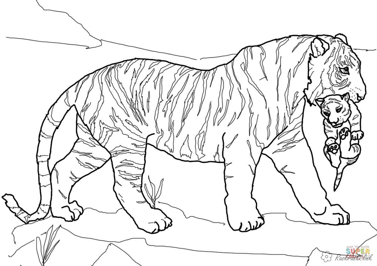 Coloring Tiger coloring pages tiger, tiger, baby, children