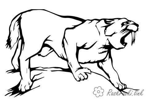 Coloring Tiger saber-toothed tiger, coloring pages, wild predators