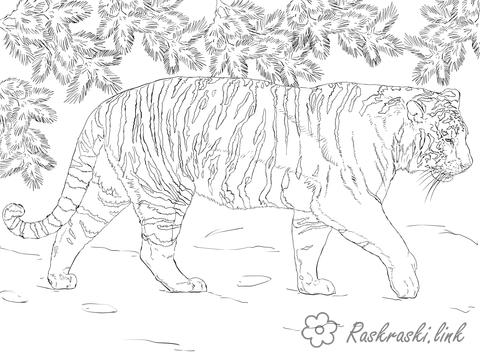Coloring Tiger Tiger, wood, leaves, coloring pages for kids