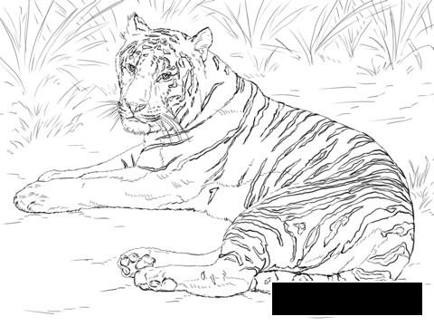 Coloring Tiger Tiger, resting, grass, nature