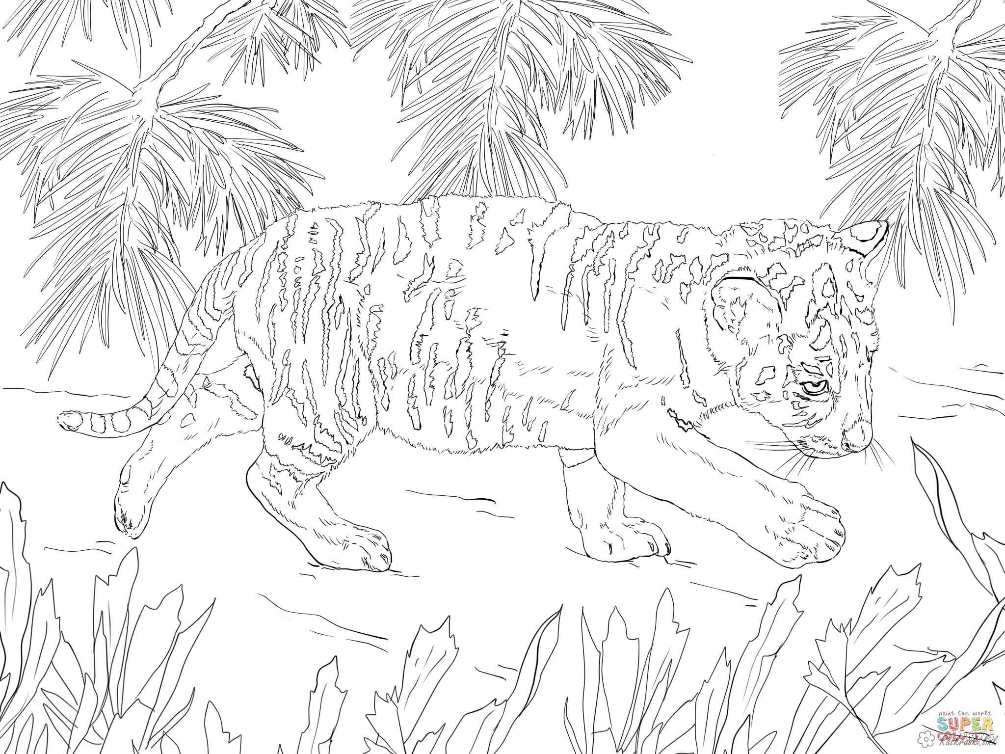 Coloring Tiger tiger, forest, grass, nature