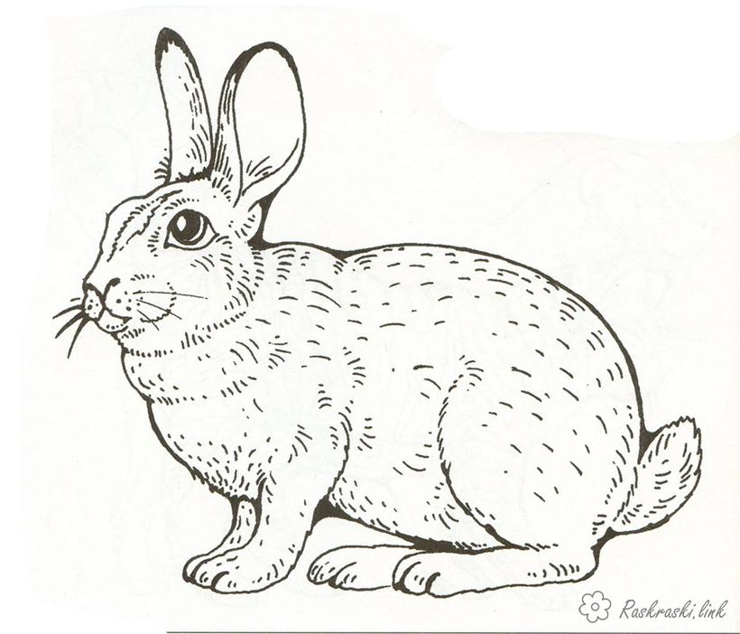 Coloring Rabbits  coloring pages rabbit, pets, children