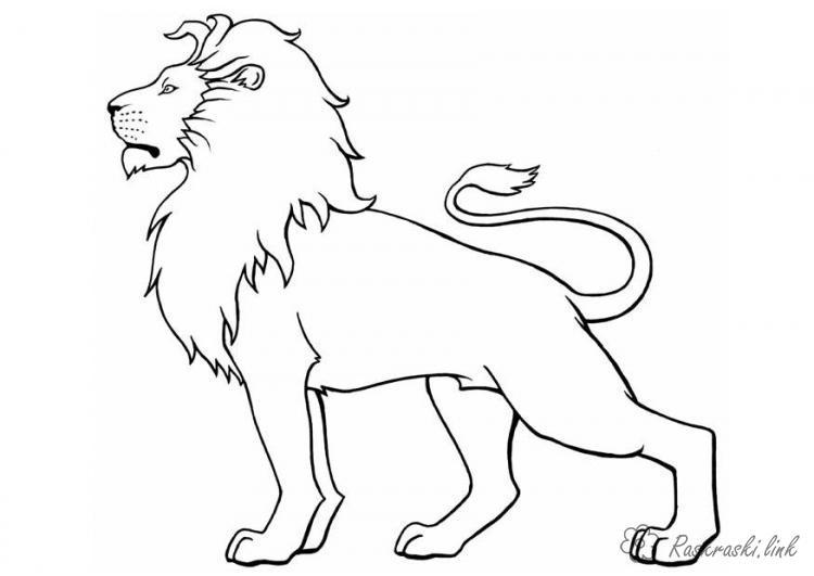 Раскраски лев раскраски лев, для детей, дикие животные