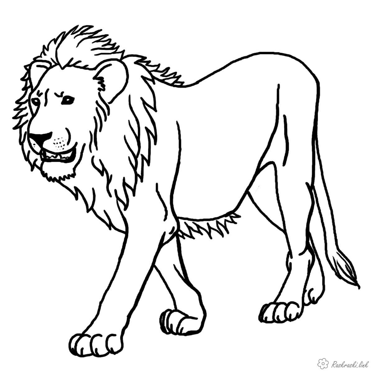 Раскраски грозный раскраска лев, для детей, хищник