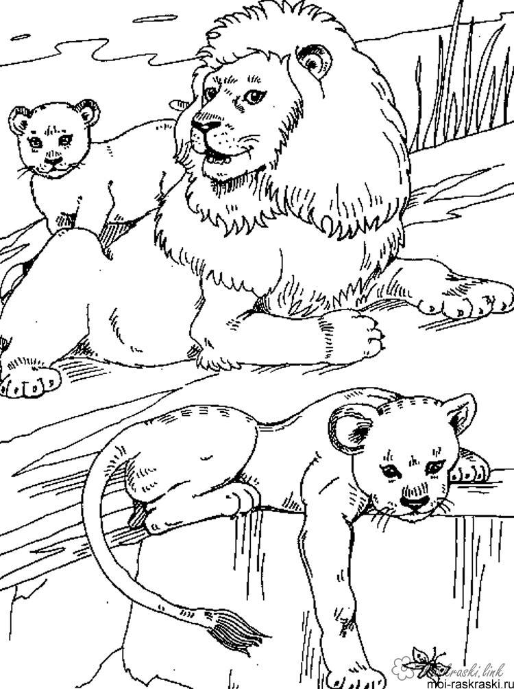Розмальовки Лев лев, левенята, скелі ,. природа