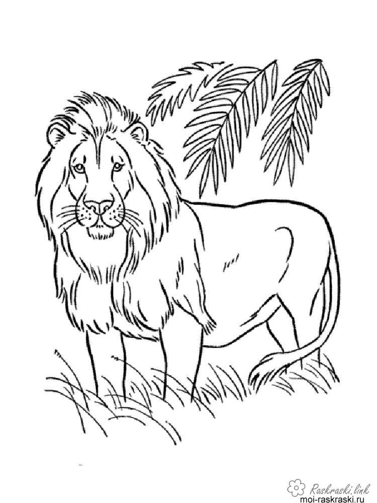 Розмальовки Лев розмальовки для дітей, дерева, природа, дикі тварини