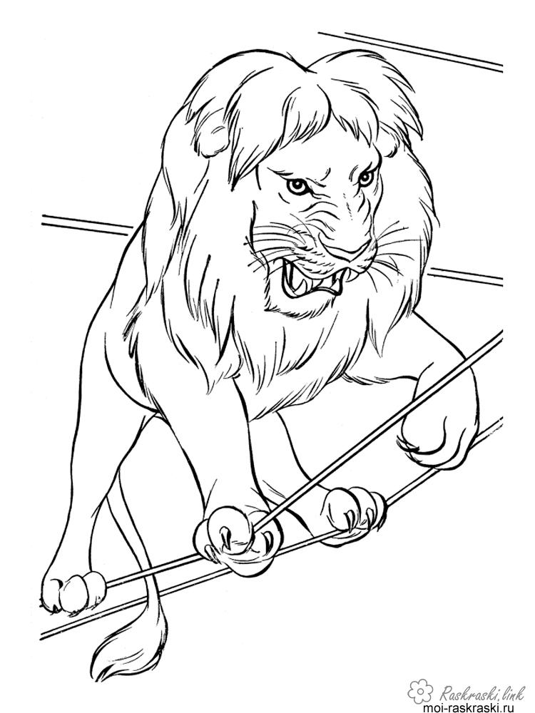 Розмальовки лев цирковий лев, канати, гарчить