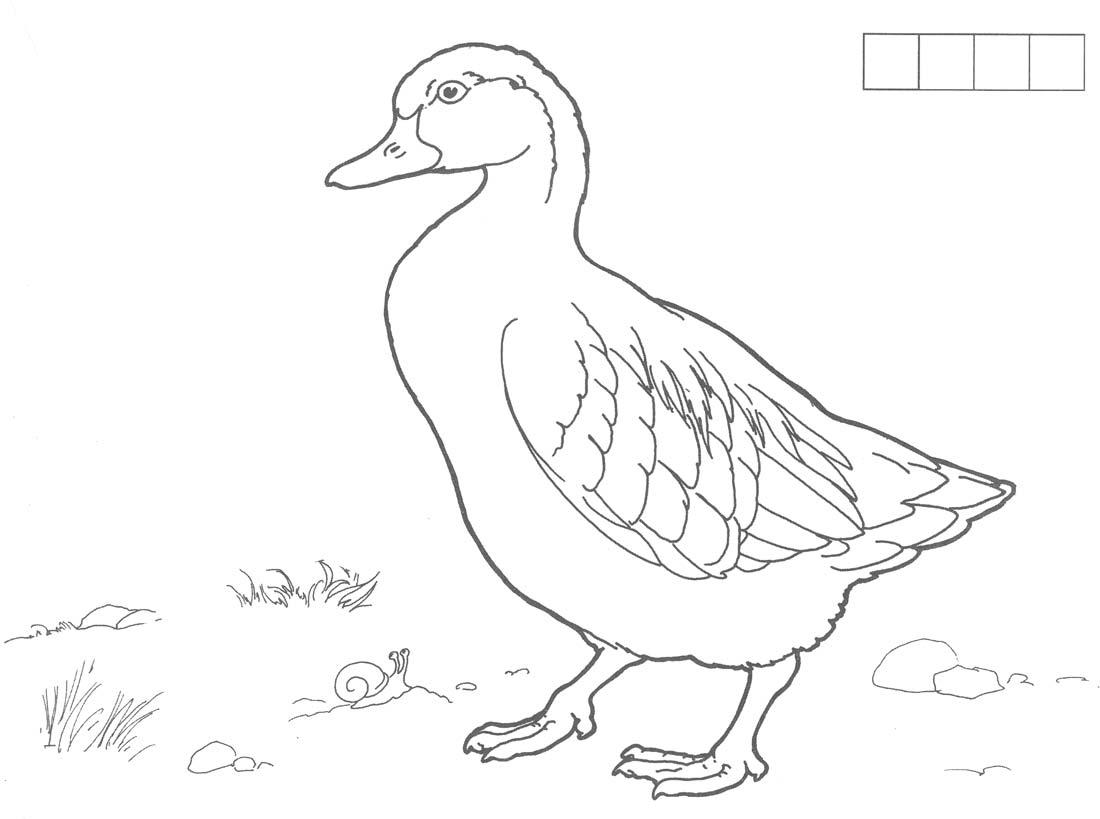 Coloring Duck duck, grass, coloring pages poultry
