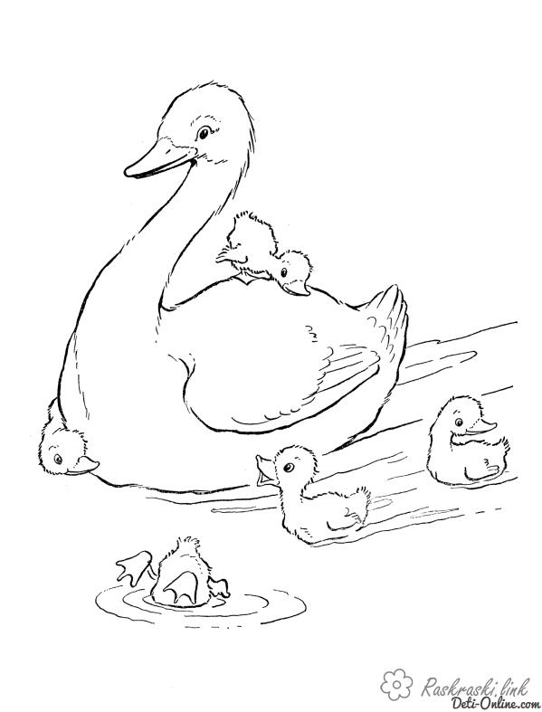 Coloring Duck coloring pages duck, ducklings, children