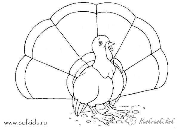 Coloring Indjuk coloring pages for kids, nice turkey, poultry