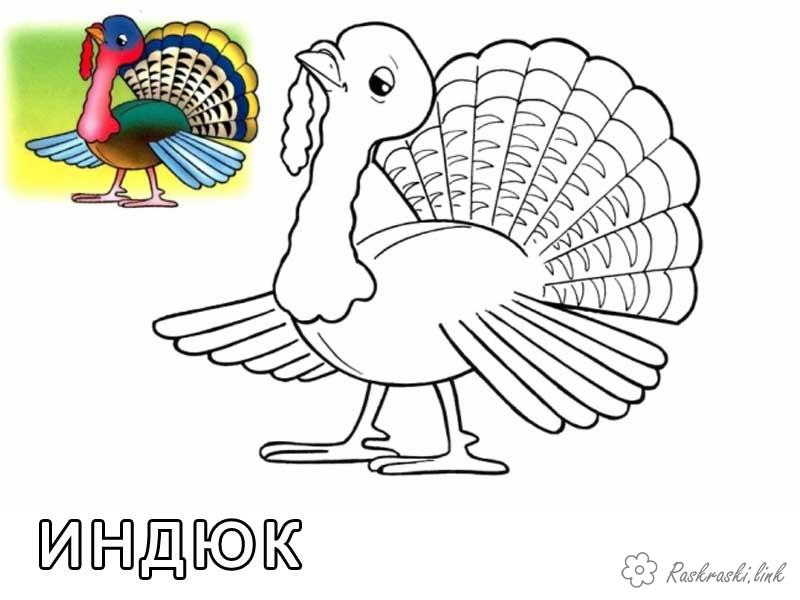 Coloring Indjuk poult, coloring pages for kids