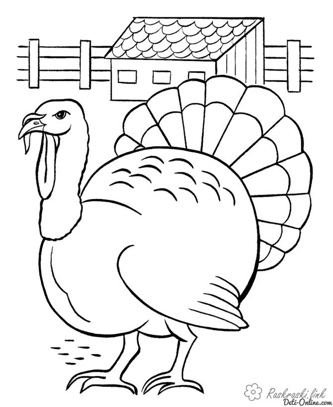 Coloring Indjuk coloring pages turkey, fence, barn, poultry yard
