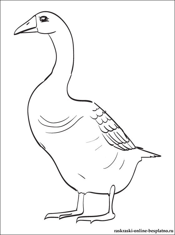 Coloring goose domestic goose, coloring pages for children