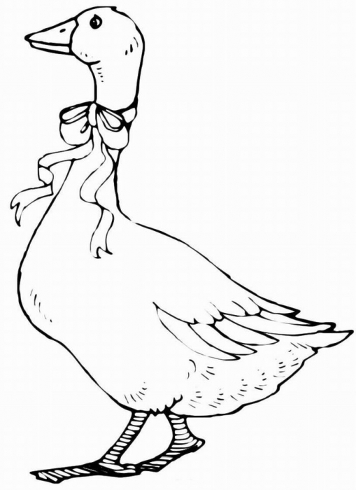 Coloring goose coloring pages Goose with a ribbon, for children