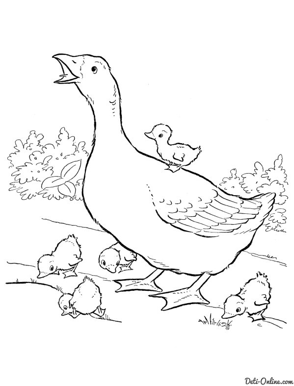 Coloring poultry coloring pages goose, geese, nature, poultry