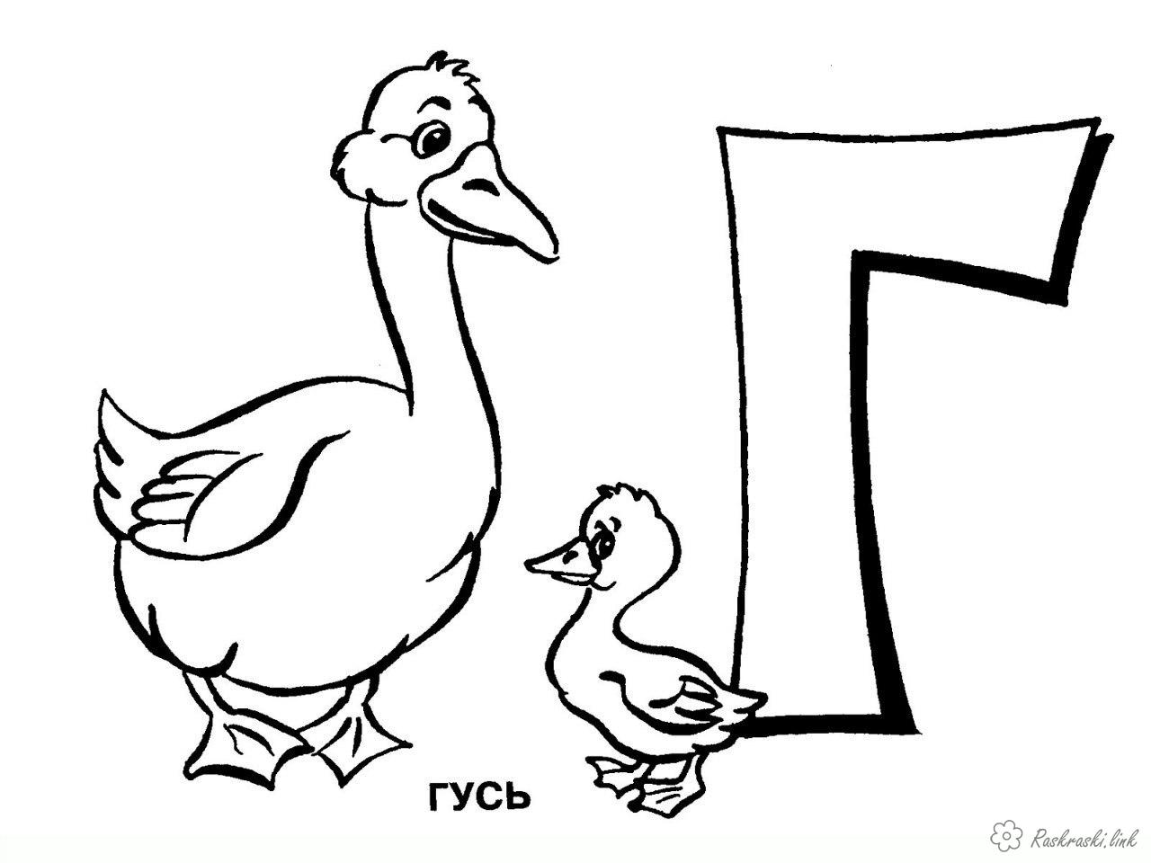 Розмальовки Гуси розфарбування гусак і гусеня, домашні тварини, птахи
