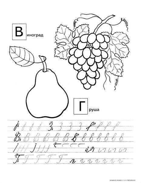 Розмальовки виноград пропис, буква в, буква г