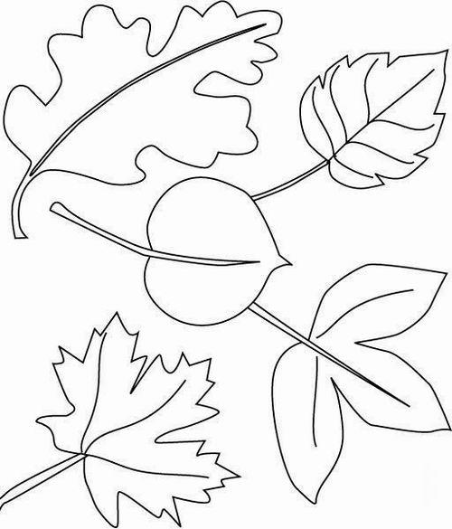 Coloring The leaves of trees coloring pages leaves