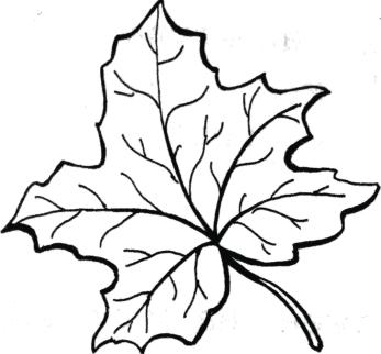 Coloring The leaves of trees coloring pages circuit maple leaf